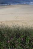 Spokojna plażowa scena z różowymi kwiatami Zdjęcie Royalty Free