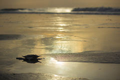 Spokojna plaża Obrazy Royalty Free