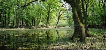 Spokojna rzeka Obraz Royalty Free