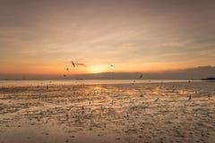 Spokojna scena z seagull lataniem na zmierzchu Zdjęcia Royalty Free