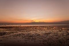 Spokojna scena z seagull lataniem na zmierzchu Fotografia Royalty Free