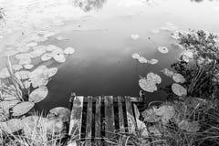 Spokojna sceniczna stojąca woda z boardwalk czarny i biały tłem zdjęcia stock