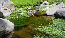Spokojna woda Zdjęcie Stock