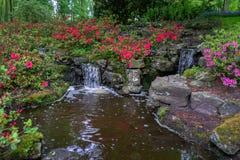 Spokojna wody cecha w luksusowym Pięknym zielonym lasu ogródzie z zwartym ulistnieniem i różanecznikiem kwitnie obrazy royalty free