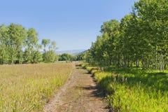 Spokojna zielona kraj scena z ścieżką prowadzi przez trawy pola otaczającego drzewami Zdjęcia Stock