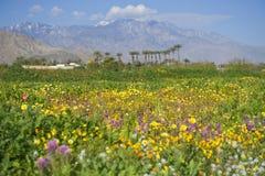 Spokojna zielona kraj scena z polem pełno mali kwiaty i góry w daleko dystansowym Obraz Royalty Free