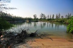 spokojnego jeziora Zdjęcie Royalty Free