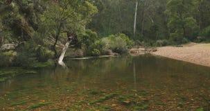 Spokojnego krzaka rzeczna scena jasna woda, wciąż, kamienisty rzeczny łóżko, zielony las zdjęcie wideo