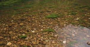 Spokojnego krzaka rzeczna scena, wciąż jasna woda, kamienisty rzeczny łóżko i zielone algi, zbiory