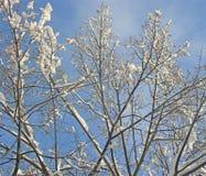 spokojnie redaguje obraz drzewo zimy wektora zdjęcie royalty free
