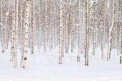 spokojnie redaguje obraz drzewo zimy wektora Fotografia Stock