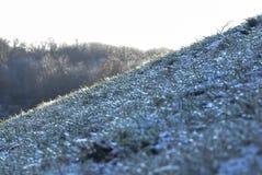 spokojnie redaguje obraz drzewo zimy wektora Zdjęcia Royalty Free