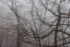 spokojnie redaguje obraz drzewo zimy wektora Obrazy Royalty Free