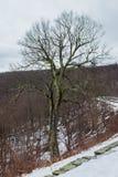 spokojnie redaguje obraz drzewo zimy wektora Zdjęcie Stock