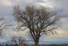 spokojnie redaguje obraz drzewo zimy wektora Obraz Stock