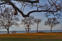spokojnie redaguje obraz drzewo zimy wektora Fotografia Royalty Free
