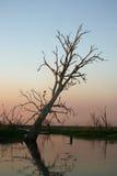 spokojny billabong kakadu Zdjęcie Stock