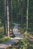spokojny i pokojowy sosna las z zielonym lasowym łóżkiem - rocznika retro ekranowy spojrzenie obrazy royalty free