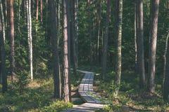 spokojny i pokojowy sosna las z zielonym lasowym łóżkiem - rocznika retro ekranowy spojrzenie zdjęcie royalty free