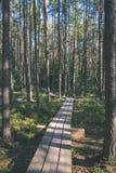 spokojny i pokojowy sosna las z zielonym lasowym łóżkiem - rocznika retro ekranowy spojrzenie fotografia stock