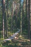 spokojny i pokojowy sosna las z zielonym lasowym łóżkiem - rocznika retro ekranowy spojrzenie obraz stock