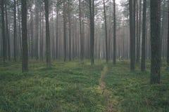 spokojny i pokojowy sosna las z zielonym lasowym łóżkiem - rocznika retro ekranowy spojrzenie obrazy stock