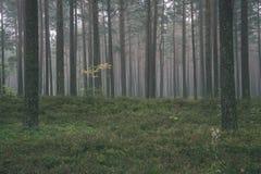spokojny i pokojowy sosna las z zielonym lasowym łóżkiem - rocznika retro ekranowy spojrzenie zdjęcie stock