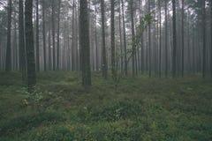spokojny i pokojowy sosna las z zielonym lasowym łóżkiem - rocznika retro ekranowy spojrzenie fotografia royalty free
