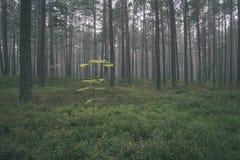 spokojny i pokojowy sosna las z zielonym lasowym łóżkiem - rocznika retro ekranowy spojrzenie obraz royalty free