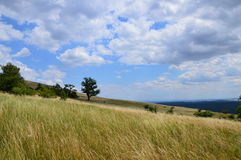 spokojny ilustraci krajobrazu lato wektor zdjęcie royalty free