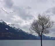 Spokojny krajobraz Zdjęcia Stock