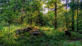 Spokojny las Obrazy Stock