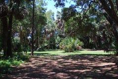 Spokojny las w natury prezerwie w Sarasota Floryda Obrazy Stock