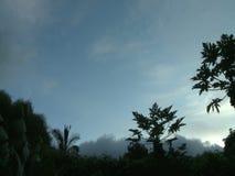 Spokojny lasowy chmurnego nieba timelapse zdjęcie wideo