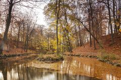 Spokojny lasowy staw Zdjęcie Royalty Free