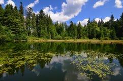 Spokojny lasowy staw Fotografia Royalty Free