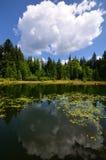 Spokojny lasowy staw Zdjęcia Royalty Free