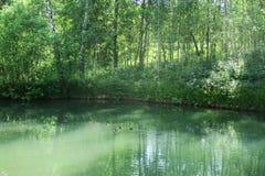 Spokojny lasowy staw obramiający bujny zieleni lasu parkiem w świetle słonecznym Zielona woda w stawie z kaczkami woko?o i drz obraz stock