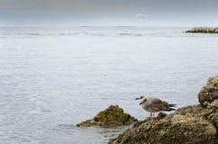 Spokojny morze Zdjęcia Stock