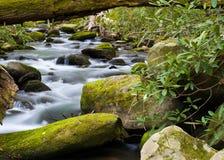 Spokojny strumień w Smokies Zdjęcia Royalty Free