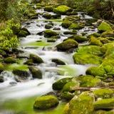 Spokojny strumień w Smokies Zdjęcia Stock