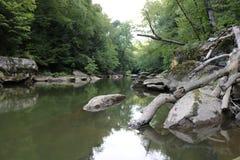Spokojny strumień w drewnach Zdjęcie Royalty Free