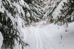 Spokojny zima krajobraz z drzewami zakrywającymi w śniegu fotografia royalty free