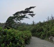 Spola sopade träd längs den lösa Stillahavs- slingan, Ucluelet, British Columbia arkivfoton