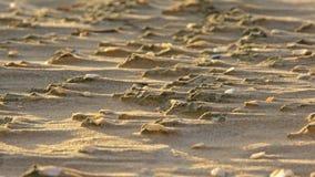 Spola spår i sanden på strandbakgrunden Royaltyfria Foton