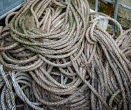 Spolar av det gamla marin- repet med fungai royaltyfri fotografi