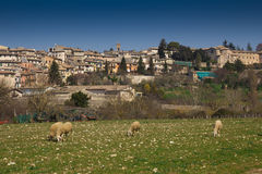 Spoleto with sheeps Stock Image
