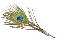 Spoletta della piuma del pavone Immagine Stock