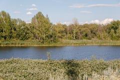 Sponda del fiume Fotografia Stock