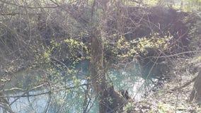 Sponda del fiume Immagini Stock Libere da Diritti